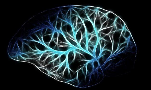 Brains Make Bank on Merch By Amazon